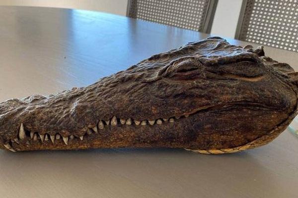 Chiếc đầu cá sấu do Hoàng thân Philip săn vào năm 1957 được bán đấu giá lên tới 5.100 bảng Anh