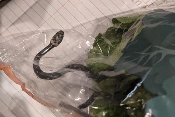 Đi mua rau xà lách trong siêu thị, đứng tim thấy con rắn cực độc ngoe nguẩy trong túi rau
