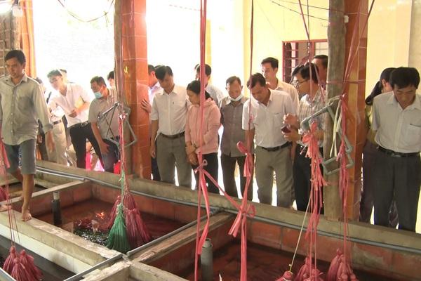 Tiền Giang: Một ông nông dân nuôi lươn không bùn ở trong nhà, bắt lên cả tấn, nhiều người kéo đến xem