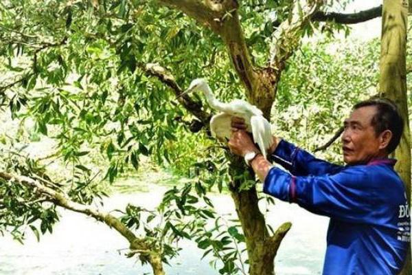 Ngắm đàn cò bợ hàng trăm con bay trắng một góc trời ở thành phố Huế
