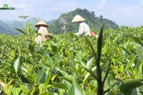 Nông dân vùng cao Sơn La: Chỉ có con đường đẩy mạnh công nghệ cao, kỹ thuật vào sản xuất mới mong thoát nghèo