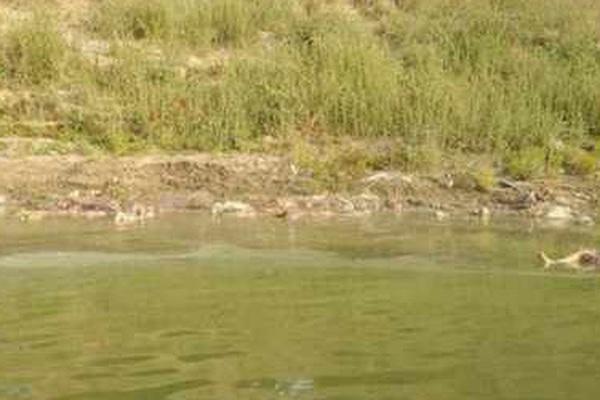 Kinh khủng: Ấn Độ phát hiện hàng chục thi thể nạn nhân Covid-19 trôi trên sông Hằng