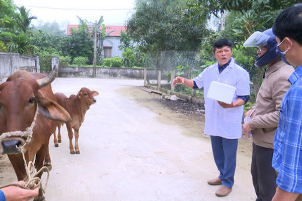 Đã có 1.179 ổ dịch viêm da nổi cục, 44.709 con trâu, bò mắc bệnh, Bộ NNPTNT chỉ đạo khẩn