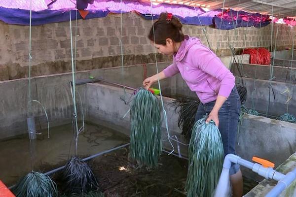 """Quảng Bình: Đánh liều """"vác"""" 200 triệu về xây bể nuôi lươn không bùn, 8 tháng chăm thấp thỏm, bất ngờ bắt lên 2 tấn"""