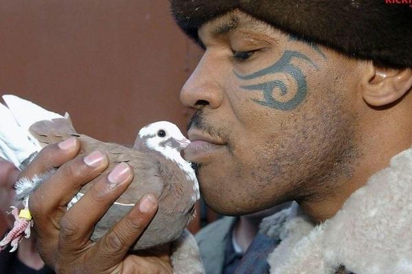 Mike Tyson đấm gục người đàn ông dọn rác để trả thù cho... 1 con chim bồ câu