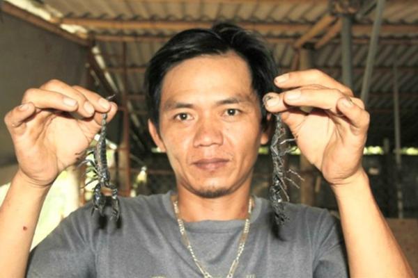 Quảng Trị: Khám phá trang trại nuôi bọ cạp đen la liệt, người yếu bóng vía không dám xem
