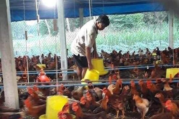 Giá gia cầm hôm nay 6/5: Giá gà, vịt diễn biến khó lường, vịt thải đi Trung Quốc bỗng khan hàng