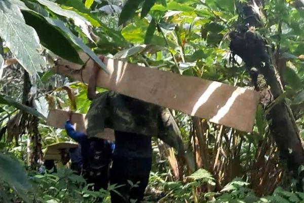 Phá rừng pơ mu Vườn Quốc gia Hoàng Liên: Trách nhiệm thuộc VQG Hoàng Liên và UBND tỉnh Lào Cai