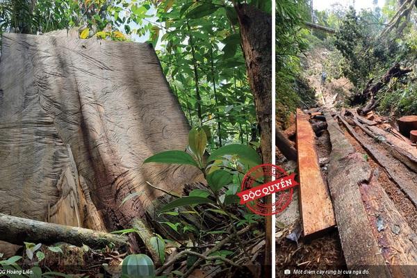Phá rừng pơ mu Vườn quốc gia Hoàng Liên: Đại biểu Quốc hội đề nghị cơ quan Công an vào cuộc