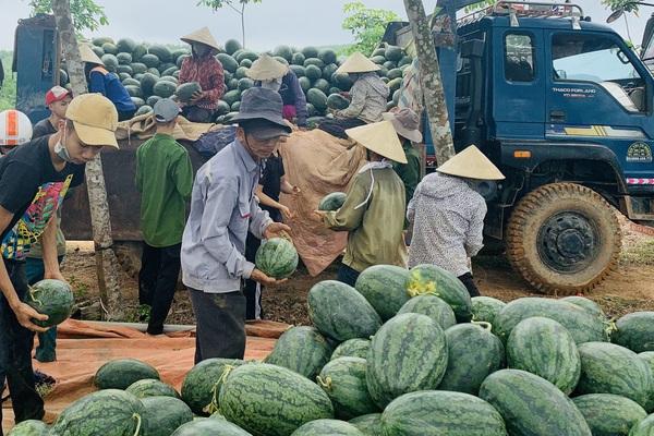 Quảng Bình: Trồng giống dưa hấu gì mà quả nào cũng to bự, nông dân tấp nập ra đồng cắt chất lên xe ô tô