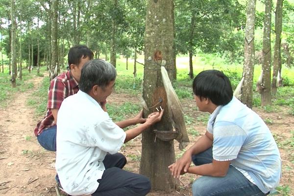 Trung Quốc nhập lượng nông sản khổng lồ này của Việt Nam về làm lốp rồi bán sang Việt Nam 3.900 ô tô