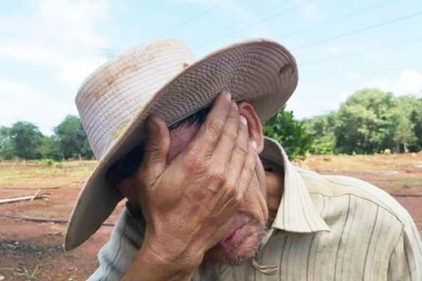 Lỗ trắng, nông dân trồng khoai lang tím Nhật chỉ biết rơi nước mắt