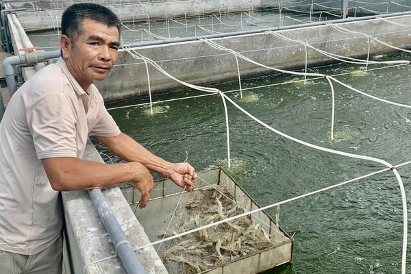 Quảng Bình: Nuôi tôm theo cách lạ này không lãng phí thức ăn, tôm ít bệnh, vụ nào cũng thắng lớn