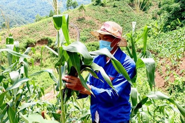 Lai Châu: Người đảng viên gương mẫu trong phát triển kinh tế