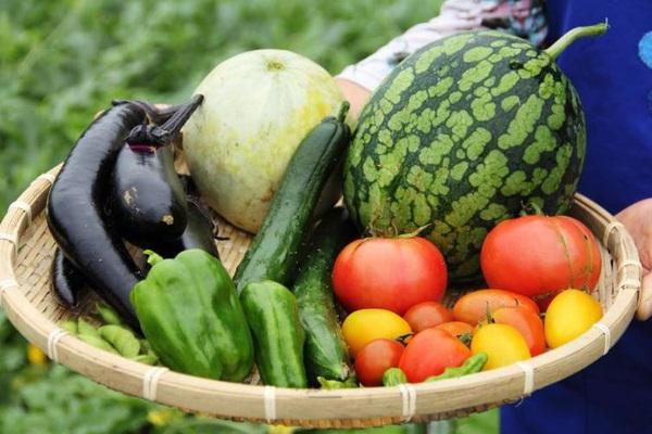 1 mớ rau hữu cơ và 1 mớ rau thông thường, nên chọn loại nào và vì sao?