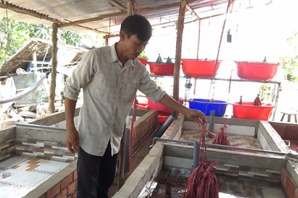 """Tiền Giang: Nuôi lươn không bùn trong bể xi măng, mỗi năm anh nông dân này """"đút túi"""" 800 triệu đồng"""