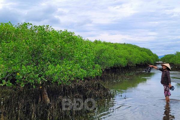 Bình Định: Ra rừng ngập mặn này chỉ cần nghe cá đớp nước đã thấy sung sướng trong lòng