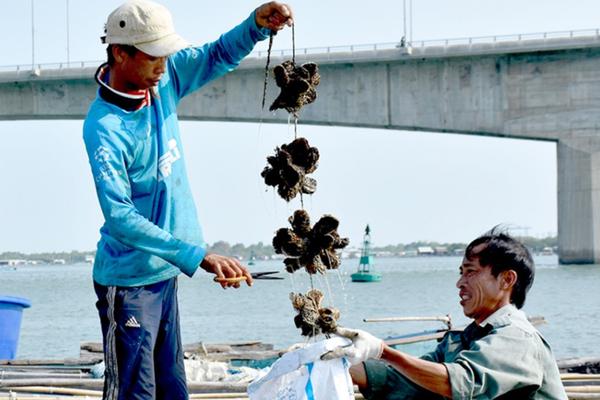 """Bà Rịa – Vũng Tàu: Thương lái """"mất tích"""", hàng trăm hộ nuôi thủy sản nhờ tỉnh giúp tiêu thụ hải sản"""