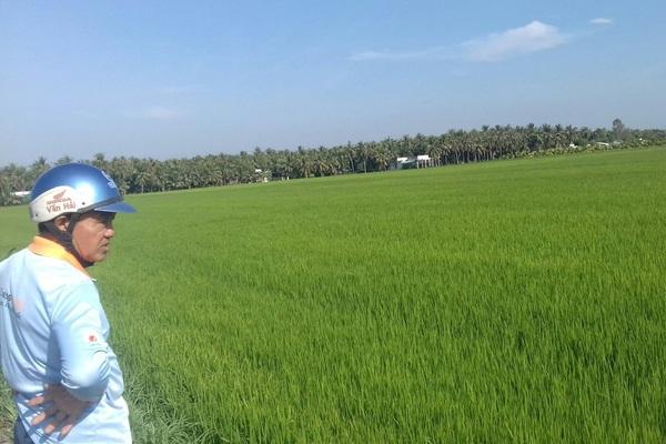 Giá phân bón tăng cực mạnh, lái bỏ chạy, nông dân trồng lúa vụ hè thu chới với