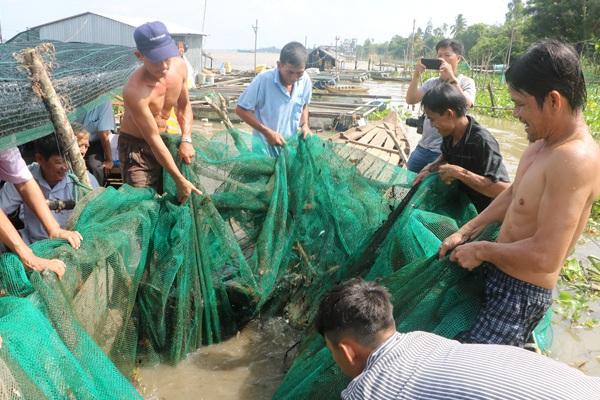 Đồng Tháp: Về Thuận Tân Hội quán xem dỡ chà bắt cá trên sông Tiền, có cá éc to, cá lòng tong tươi roi rói