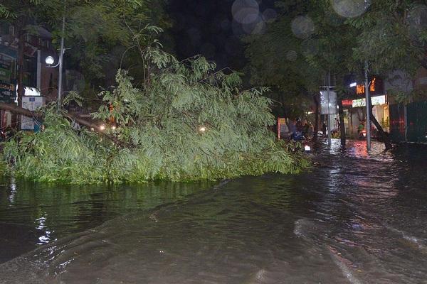 Mưa lớn, cây đổ và ngập khắp phố phường Hà Nội