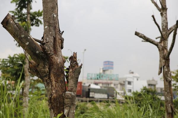 Hà Nội: Cây chết khô, ghế gãy, cỏ mọc um tùm tại công viên trung tâm quận Hoàng Mai