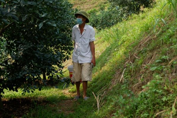 Hòa Bình: Trồng cam theo phương pháp này, dân dân xứ Mường khá giả, thu hàng trăm triệu đồng/năm