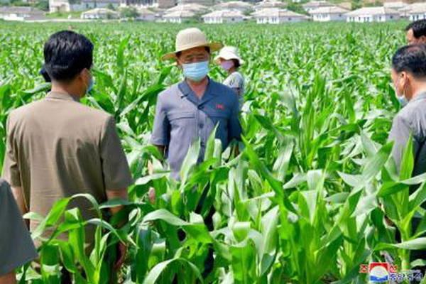 Triều Tiên thừa nhận thiếu hụt lương thực tồi tệ nhất trong hơn một thập kỷ trở lại đây