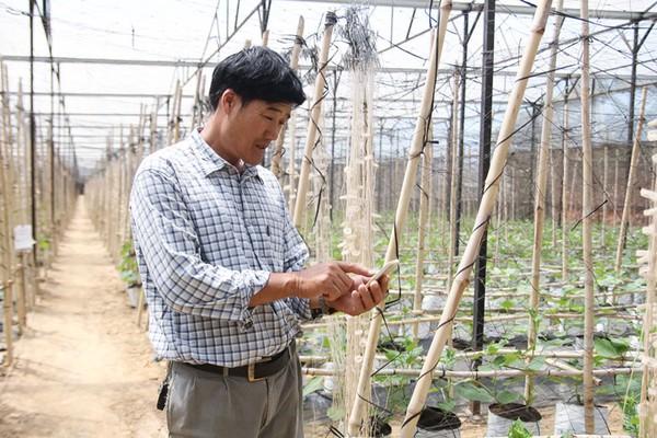 Chuyển đổi số nông nghiệp ở Lâm Đồng (bài 1): Ứng dụng  IoT vào trồng rau, nông dân thu tiền tỷ mỗi năm