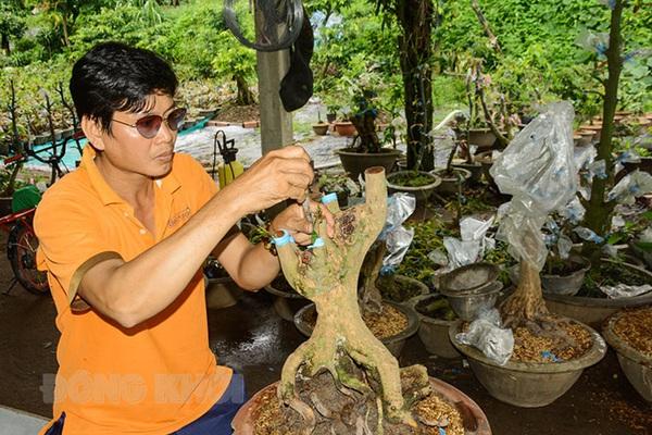 Trai làng tỉnh Bến Tre ươm, ghép những cây mai vàng giống lạ, nhiều người nhìn thấy đã mê tít