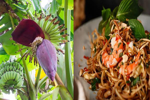 Loại cây quen thuộc ở làng quê Việt chẳng bỏ đi thứ gì, hoa của nó vừa làm món ăn vừa là bài thuốc quý