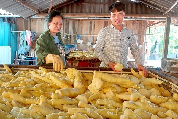 Tuyên Quang: Tre trinh là giống tre gì mà dân ở đây trước trồng cho mát, nay lại là cây làm giàu?