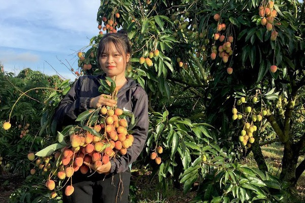 Huyện nào của tỉnh Đắk Lắk có tới hơn 8.200 hộ nông dân đạt danh hiệu sản xuất kinh doanh giỏi?