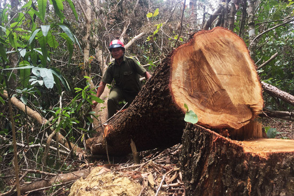 Đắk Lắk: Để mất rừng gây thiệt hại gần 30 tỷ đồng, giám đốc và 8 thuộc cấp bị truy tố
