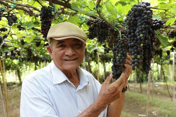 Ninh Thuận: Nông dân Việt Nam xuất sắc hơn 40 năm chỉ trồng 1 loài cây-đó là cây gì?
