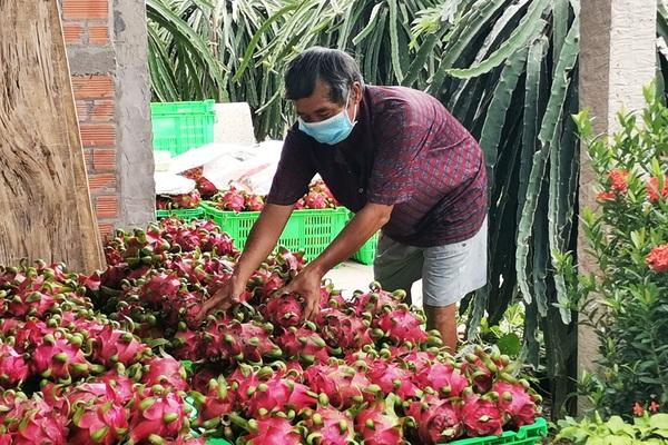 Trung Quốc tạm dừng nhập khẩu thanh long tại một số cửa khẩu, doanh nghiệp kiến nghị khẩn để giảm phụ thuộc