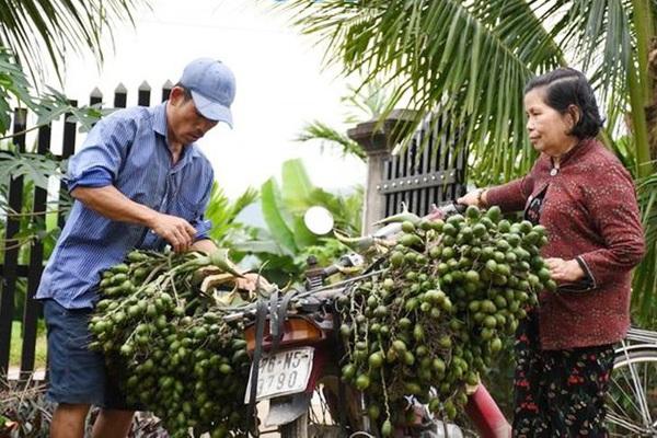 Trung Quốc lùng mua cau non, giá cau tăng chạm nóc nhưng đừng ham trồng nhiều, đây là lý do