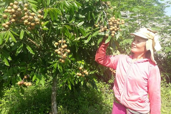 Lai Châu: Nông dân vùng khó chung tay xây dựng nông thôn mới