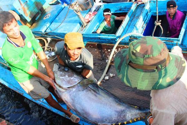 Đề xuất bổ sung thẩm quyền xử phạt của bộ đội biên phòng, cảnh sát biển trong vi phạm hành chính lĩnh vực thủy sản