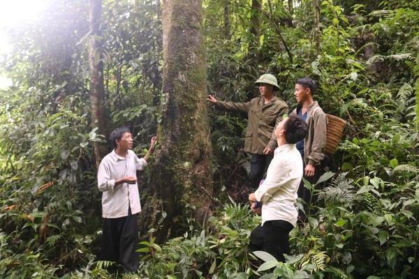 Chuyện bảo vệ, phát triển rừng ở Mường La