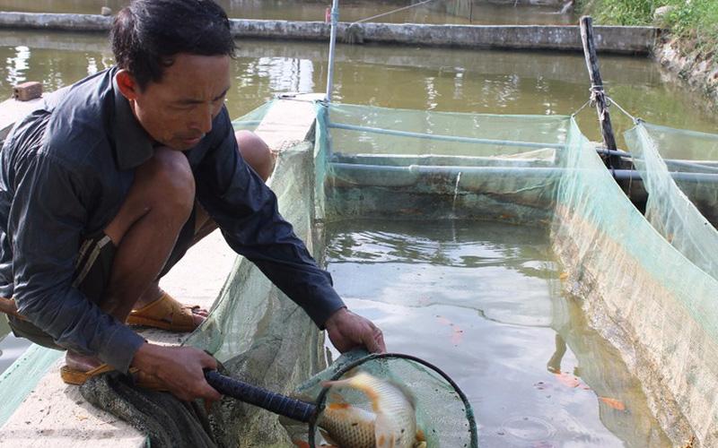 1ha nuôi cá nước ngọt mỗi năm thu lãi 100 triệu đồng ở Ninh Thuận