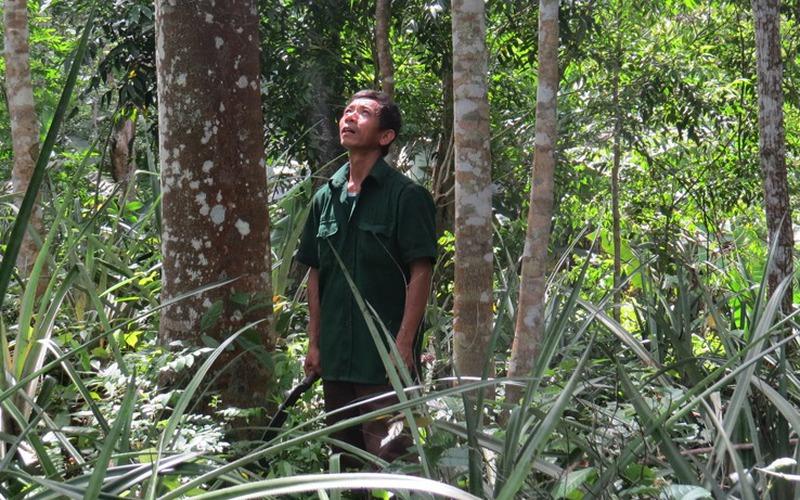 Bỏ lâm tặc đi trồng rừng gỗ quý làm của để dành