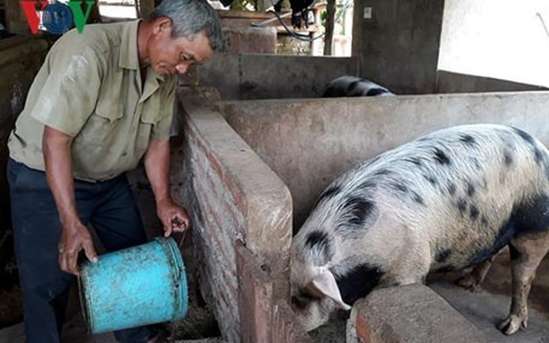 """Lão nông Khơ Mú chăn nuôi lợn thu nhập """"khủng"""" mỗi năm"""
