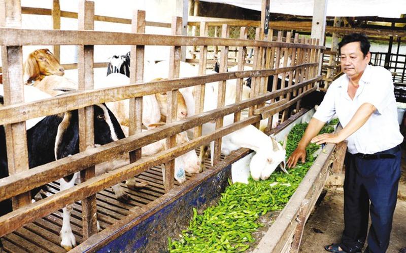 Đừng coi thường phụ phẩm nông nghiệp trong chế biến thức ăn chăn nuôi