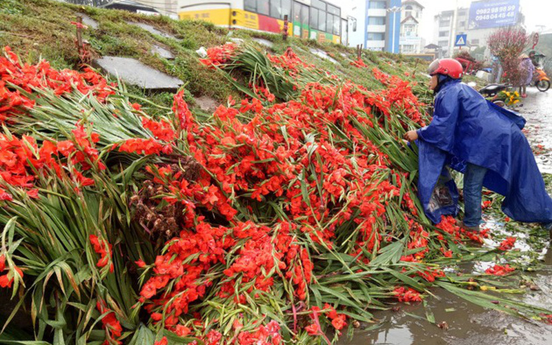 Sau tết giá hoa thấp kỷ lục, dân buôn đổ đống ven đường