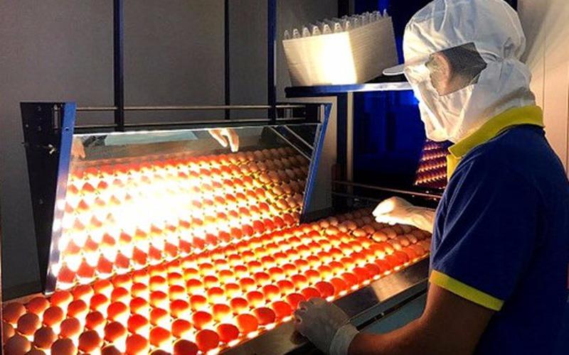 Công ty Ba Huân và tâm niệm thay đổi thói quen để sử dụng trứng sạch