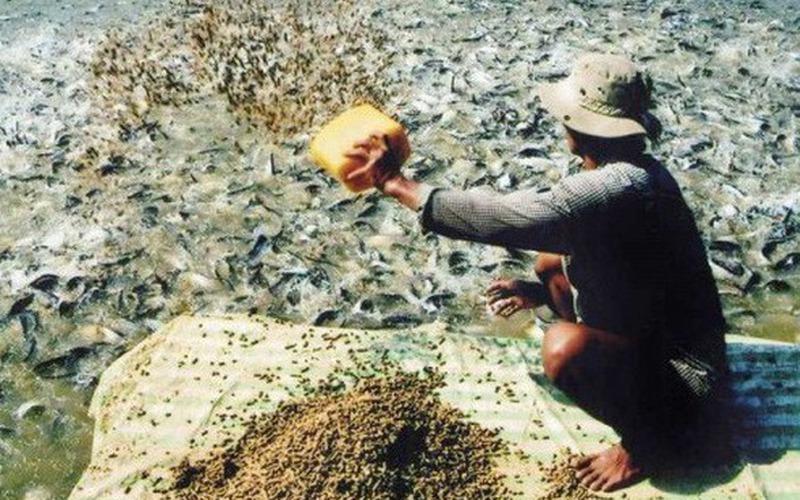 Gian dối kinh doanh thức ăn chăn nuôi, thủy sản bị phạt đến 200 triệu đồng