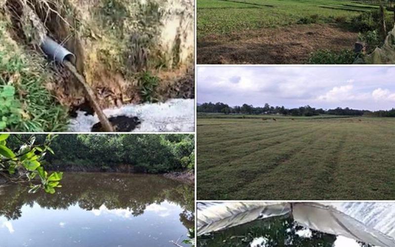 Hồ Khe Lang ô nhiễm nghiêm trọng từ trang trại lợn