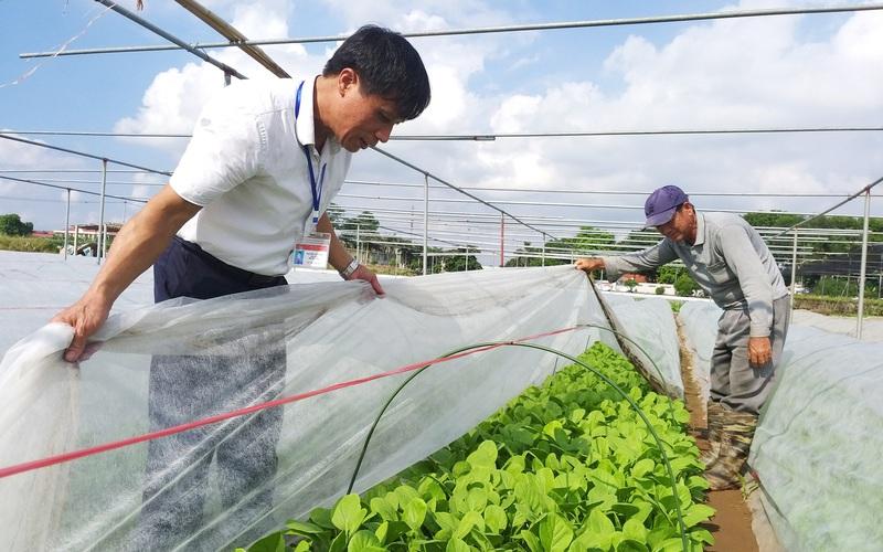 Hà Nội có nơi người dân trồng rau không phun thuốc trừ sâu, khách Nhật - Hàn phải sang tận nơi mua
