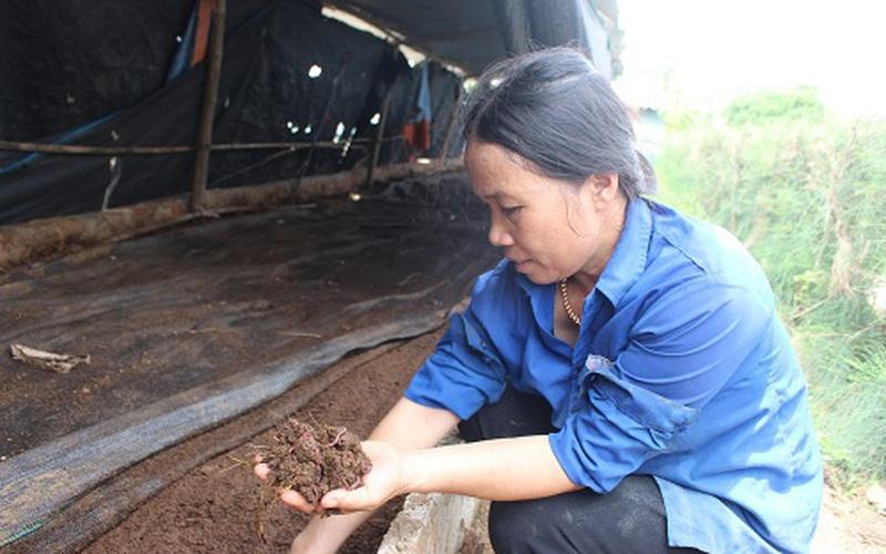 Hà Tĩnh: Nuôi loài không mắt, trơn tuồn tuột, tối ngày chui dưới đất, bà nông dân mỗi năm bỏ túi cả trăm triệu đồng